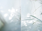 伊藤之一写真展「under glass」