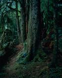 上田義彦写真展「森の記憶」