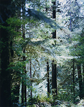 上田義彦写真展「Forest 印象と記憶1989-2017」