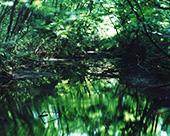 鈴木理策 写真展「Water Mirror」