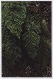 安達ロベルト 写真展「Five Seasons」