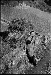 石田榮 作品展「はたらくことは 生きること―昭和30年前後の高知」