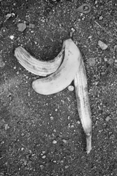 岸幸太 写真展「そんな、バナナ」