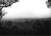 青木弘 写真展「樹平線」中央アフリカの宇宙(コスモス)